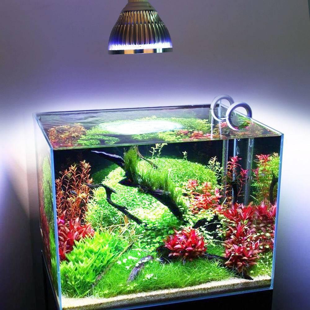 Нужно ли выключать свет в аквариуме на ночь: разберемся