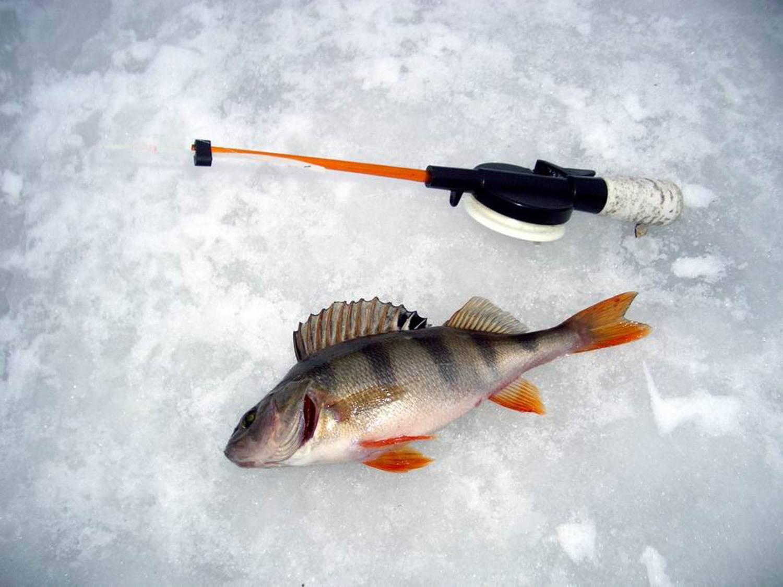 Ловля окуня в начале сезона открытой воды