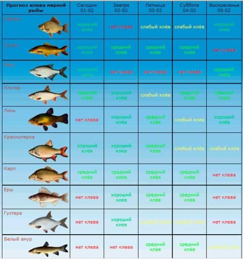 В какую погоду лучше клюёт рыба зимой - рыбачок!сайт рыбачок