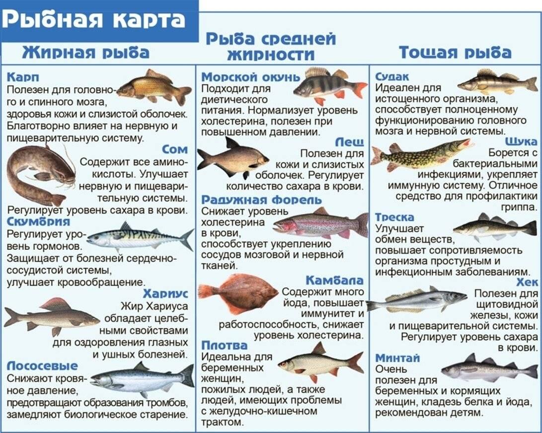 Навага польза и вред - 105 фото и видео советы как выбрать и приготовить рыбу правильно