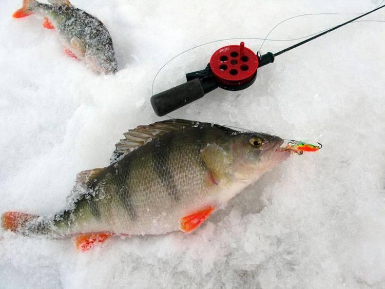 Рыбалка на окуня по последнему льду