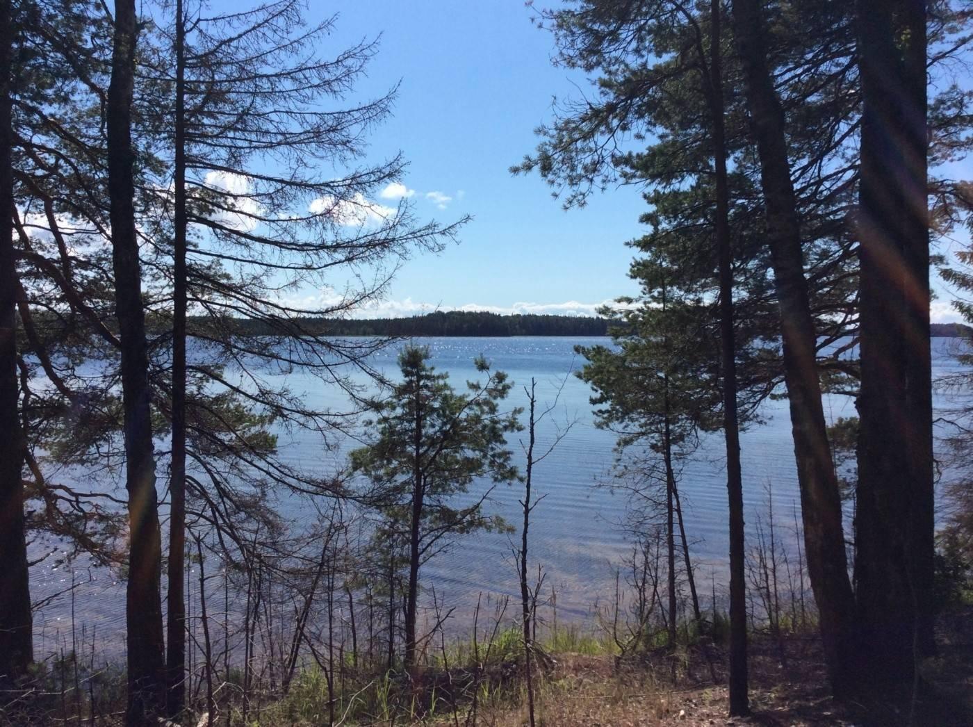 Кояшское озеро в крыму: где находится, как добраться, описание
