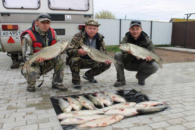 Рыбалка в астрахани сейчас: базы отдыха и ловля рыбы дикарем