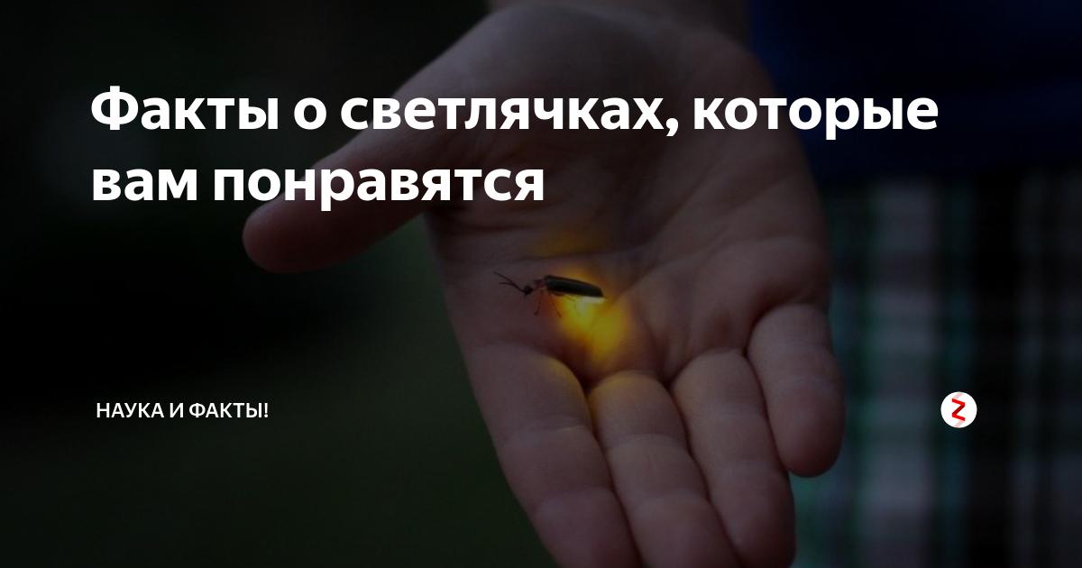 Светлячок насекомое. образ жизни и среда обитания светлячка | живность.ру