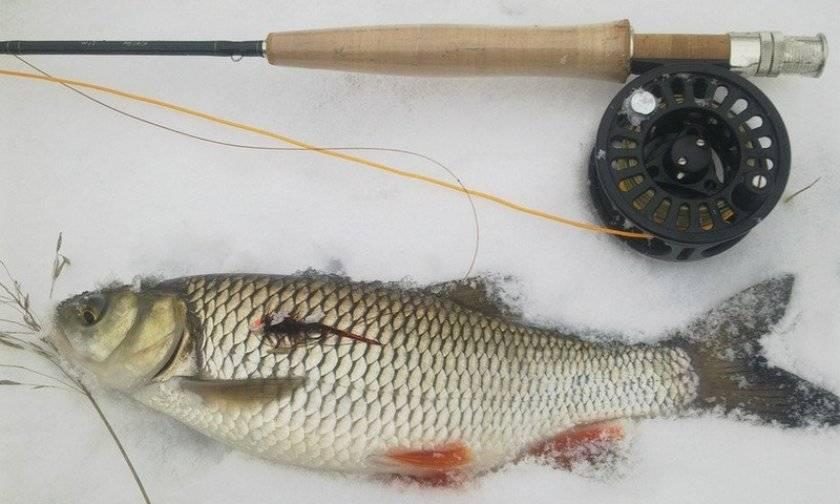 Ловля голавля зимой: снасти и способы ловли на течении
