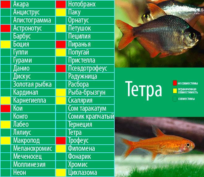 Таблица совместимости популярных видов аквариумных рыбок