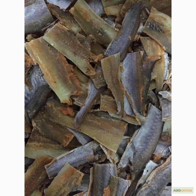 Рыба путассу: польза и вред, как вкусно приготовить