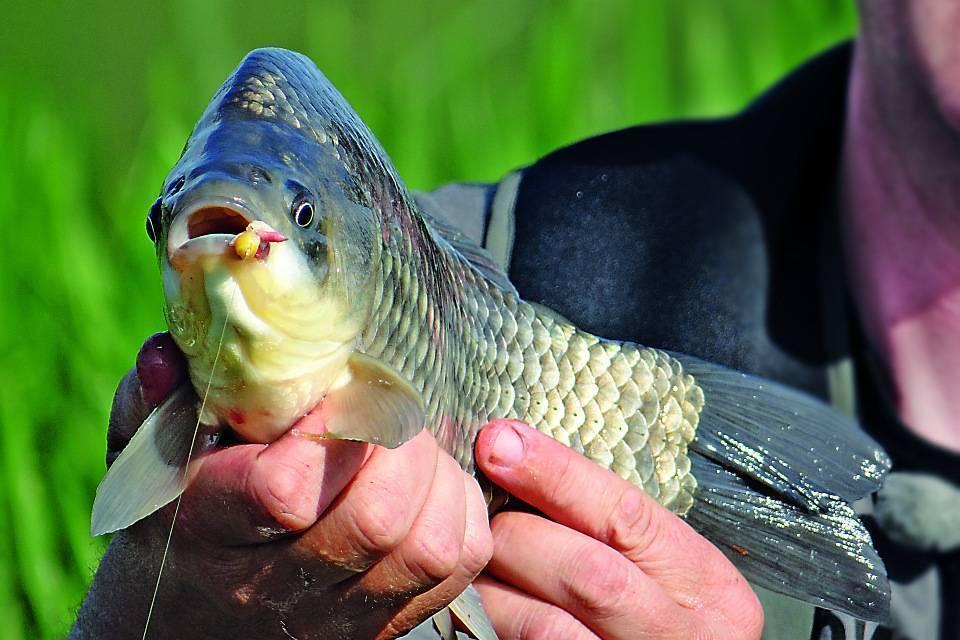 Ловля на кружок карпа, сома, карася. ловля рыбы на кружок с берега осенью, летом
