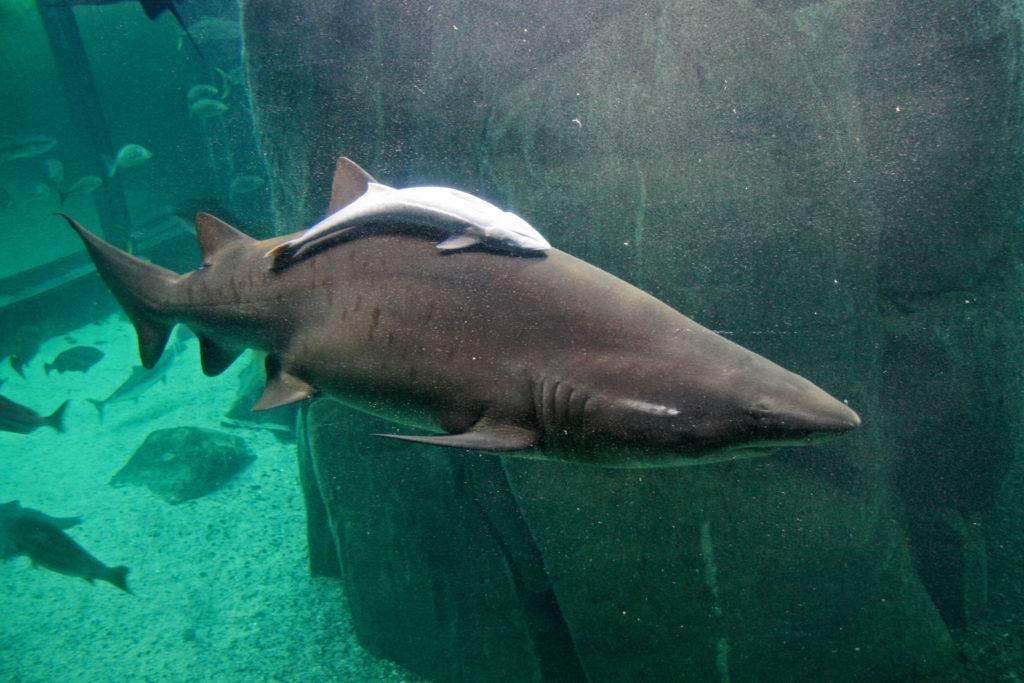 Белая рыба: виды, названия с фото, особенности и полезные свойства