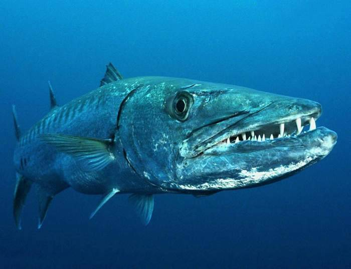 Самые опасные рыбы в мире. топ-10