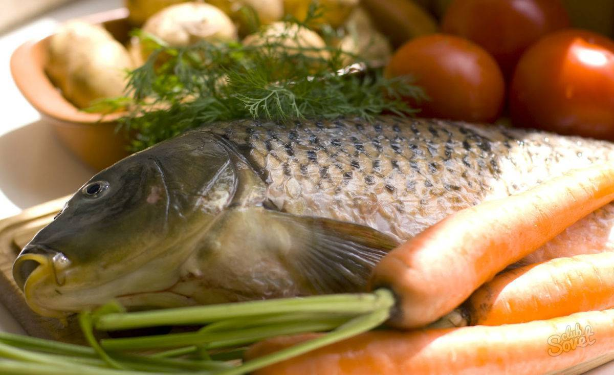 Свойства минтая — показания и противопоказания к применению, обзор состава и характеристика рыбы (видео + 85 фото)