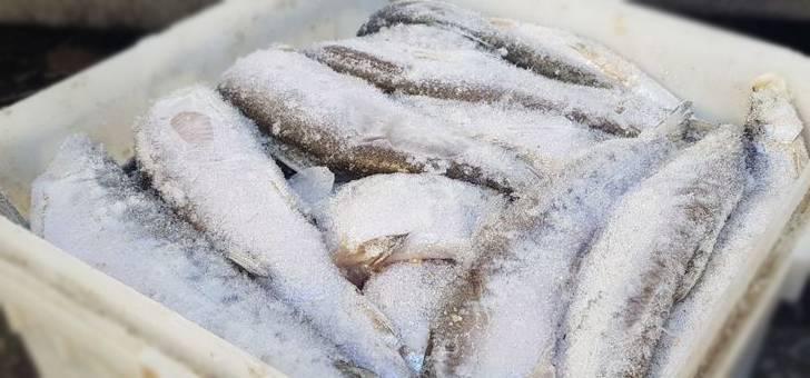 Как засолить рыбу для сушки или вяления? засолка рыбы: рецепт, продолжительность