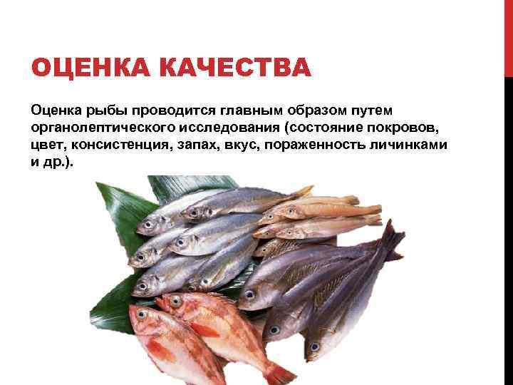 Рыба корюшка польза и вред