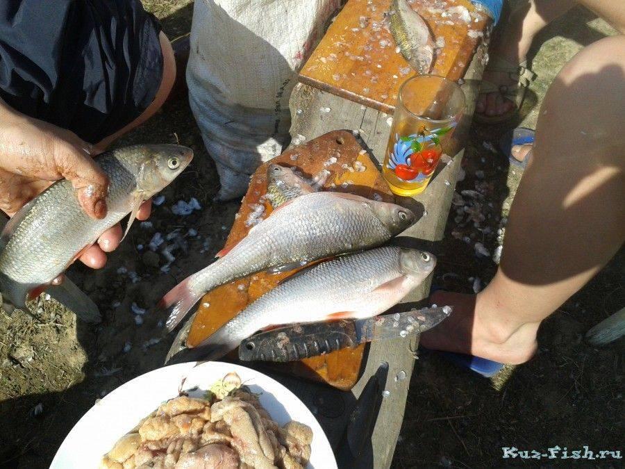 Платная и бесплатная рыбалка в алтайском крае