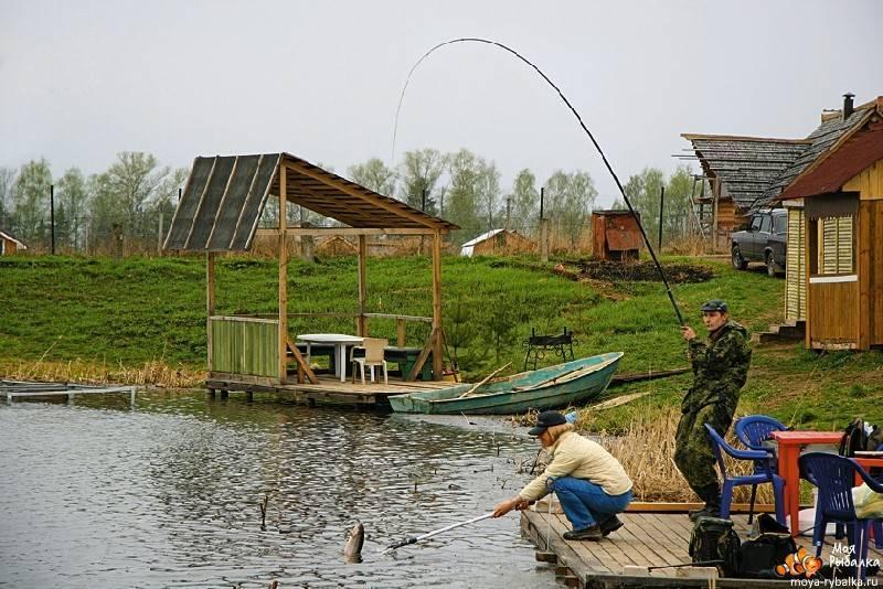 Пресноводная рыбалка в крыму 2020 — форель, щука, карп, карась, сазан, окунь…
