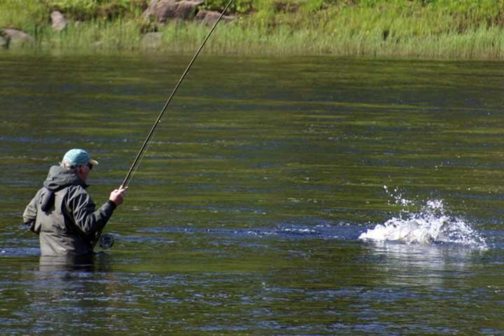 Лосось и судак на онежском озере.рыбалка в карелии на спиннинг.salmon and walleye
