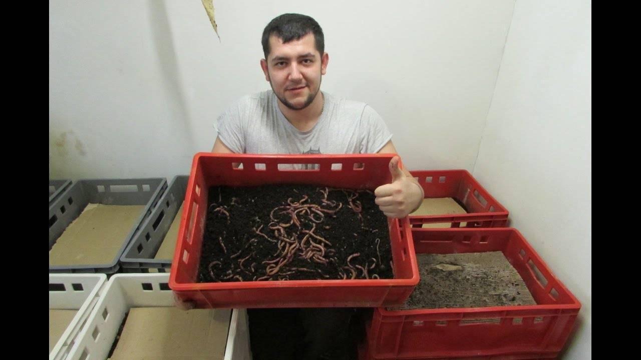 Организация разведения червей
