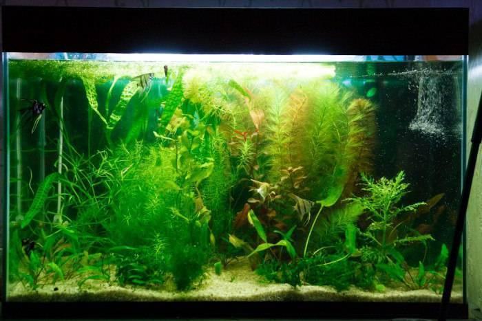 Почему в аквариуме мутнеет вода: советы,как бороться?