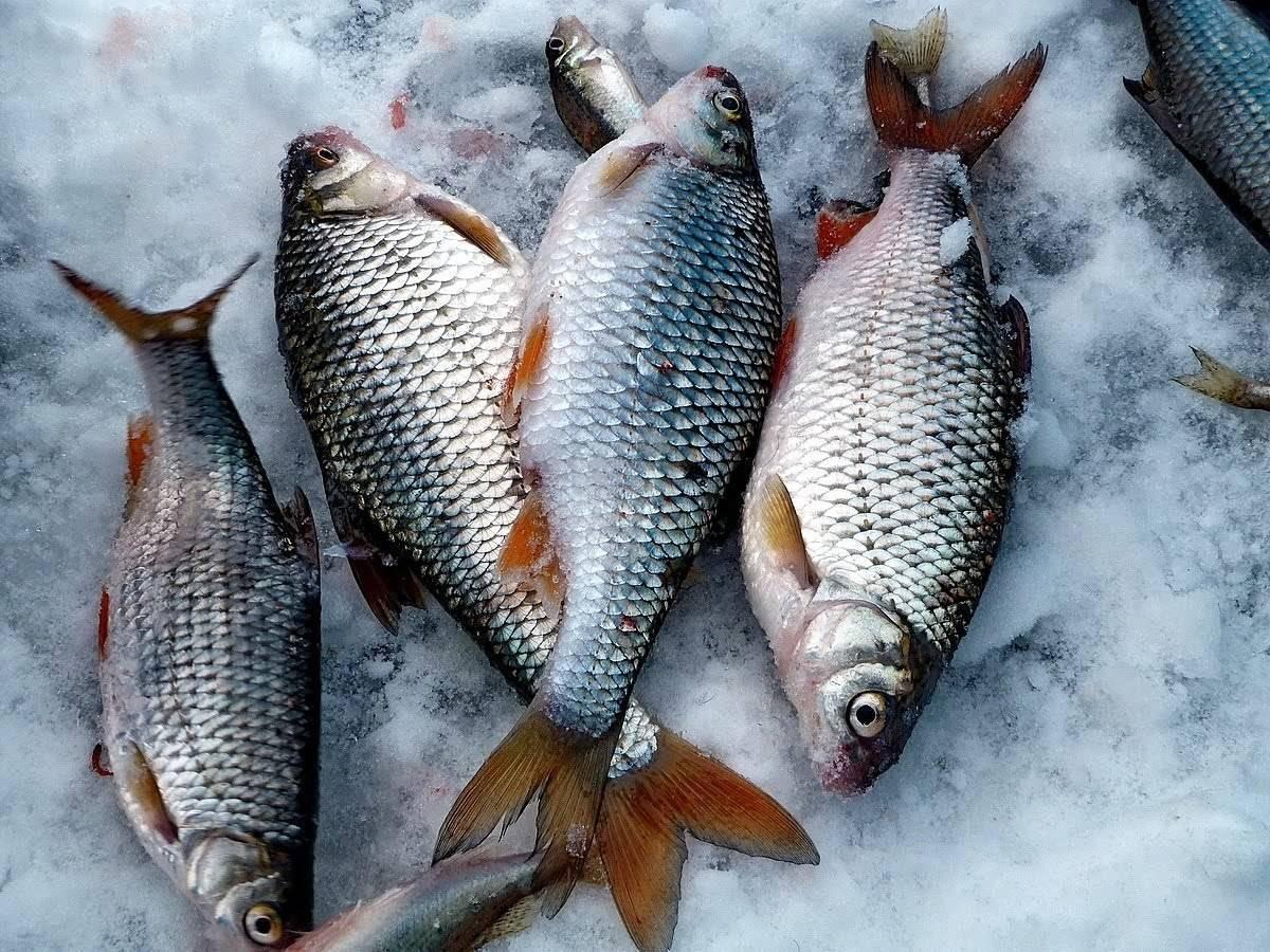 Закон о рыбалке: новые правила 2020, штрафы, изменения