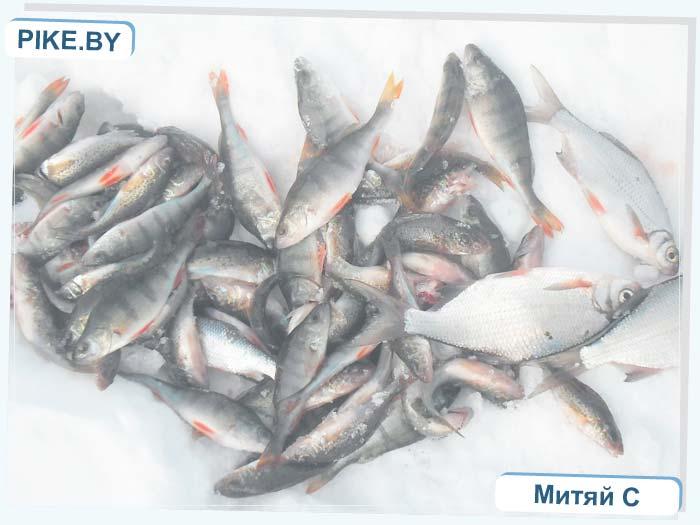 Особенности рыбалки на леща — Рыбалка на Белом озере — Белое озеро