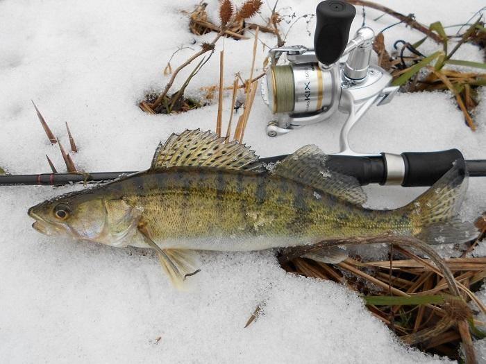 Рыбалка на судака и берша со льда