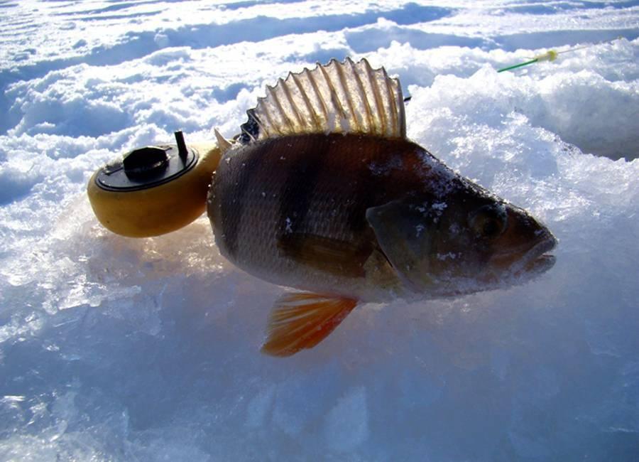Ловля на безмотылку зимой видео новинки • artafish.ru