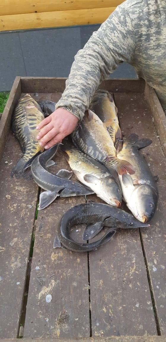 Платные пруды: список лучших. платная рыбалка в подмосковье. цены, отзывы
