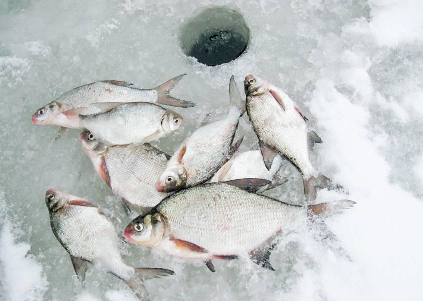 Ловля леща зимой на поплавок и мормышку, выбор прикормки, наживки и снастей | про рыбалку - секреты рыбной ловли