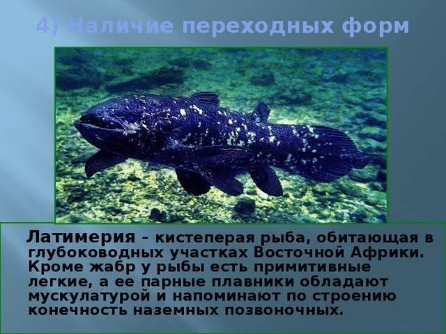Где обитает латимерия – древняя кистеперая рыба