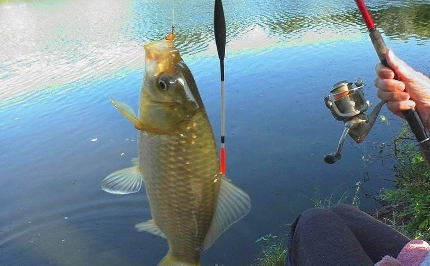 Как ловить карася весной, летом и осенью – руководство по ловле №1