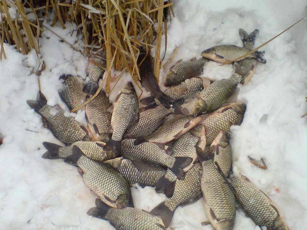 Нерестовый запрет — 2019 в астраханской области: актуальные сроки и места лова рыбы
