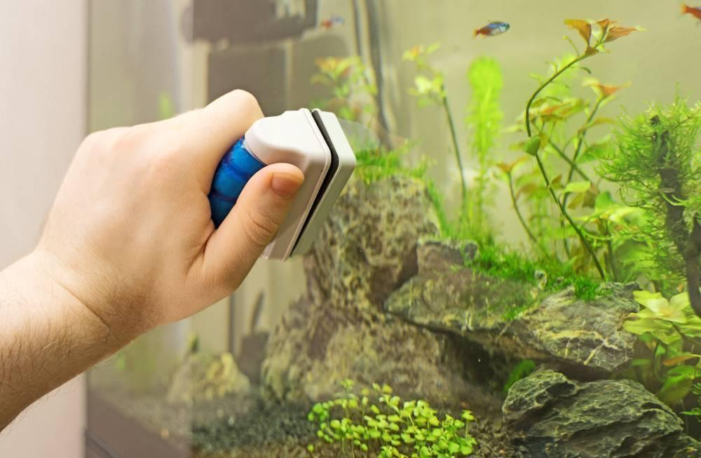 Чистка аквариума (25 фото): как чистить аквариум с рыбками в домашних условиях? чем мыть? средства для полной чистки. как правильно отмыть его от известкового налета своими руками?