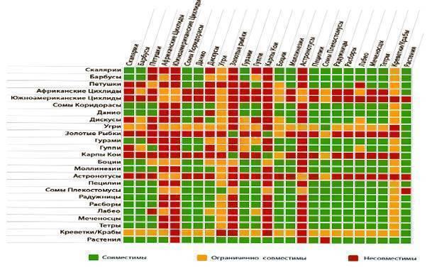 Совместимость скалярий с другими рыбами (35 фото): содержание скалярий с тернециями и барбусами, золотыми рыбками и неонами в аквариуме