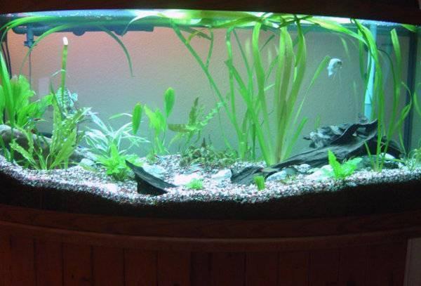 Все, что нужно знать о разведении рыбок петушков в аквариуме