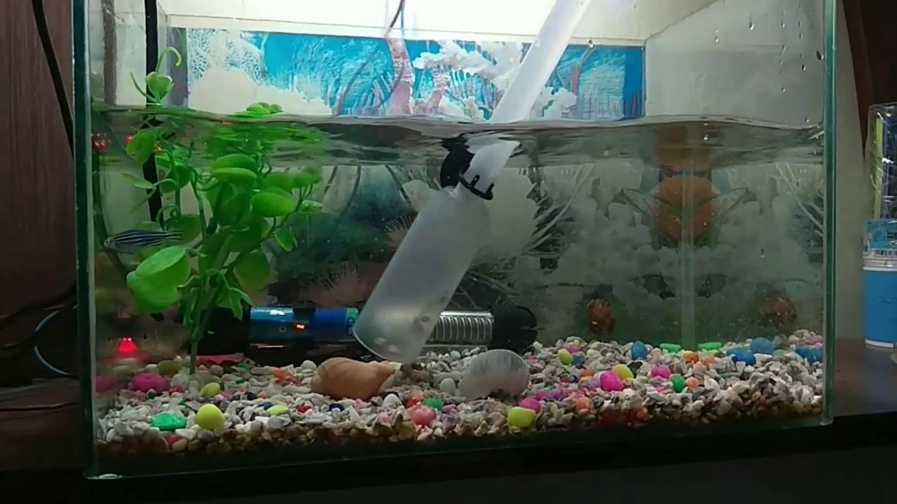 Вода для аквариума - почему мутнеет, зеленеет, сколько отстаивать, как часто менять, как смягчить