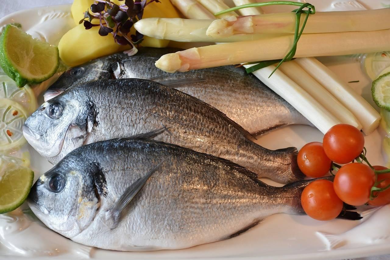 Простипома рыба фото