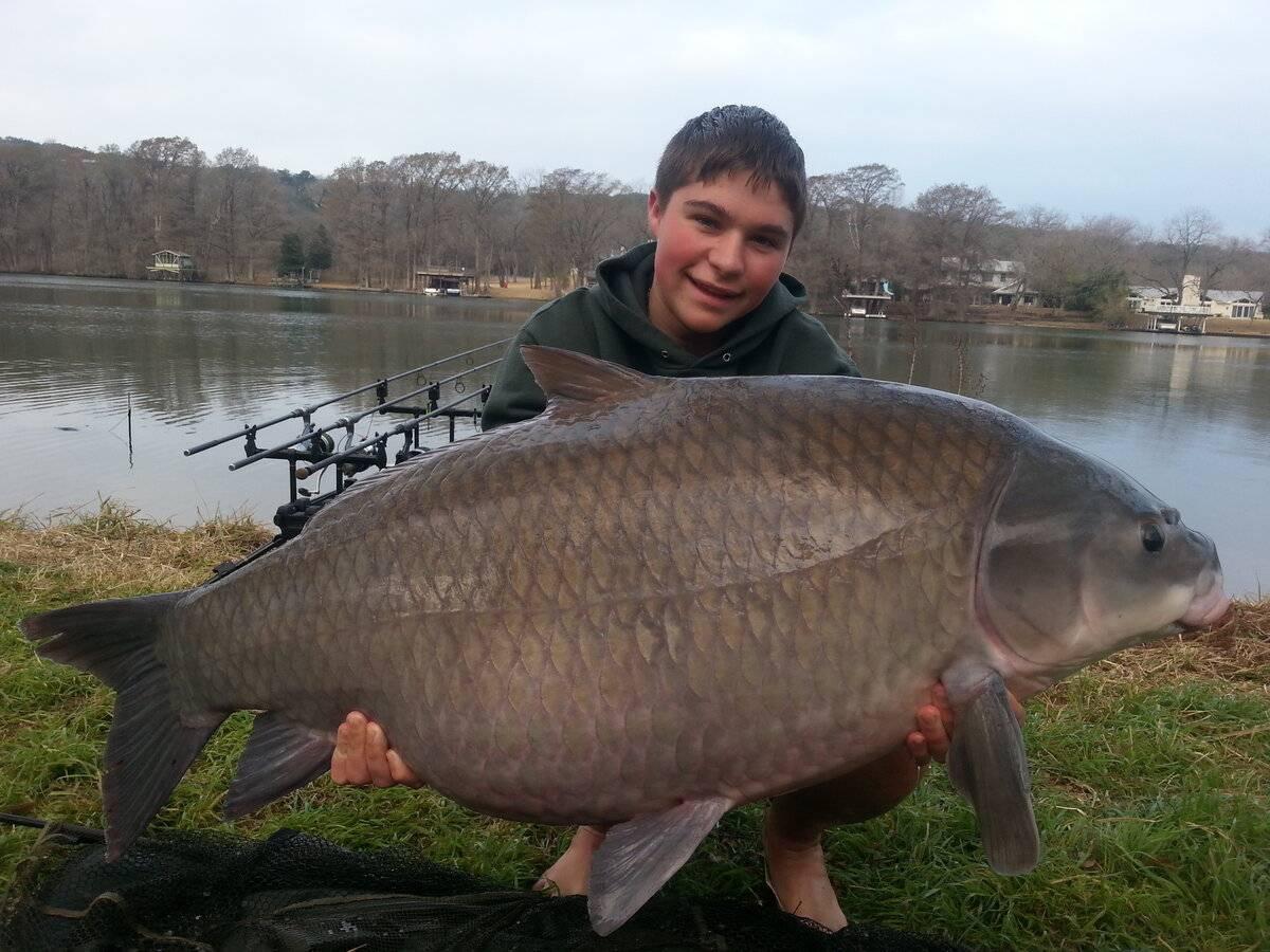 Рыба буффало в астрахани — ловись рыбка