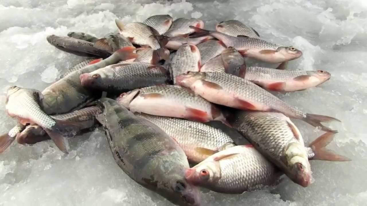 Где половить рыбу за денежку в твери