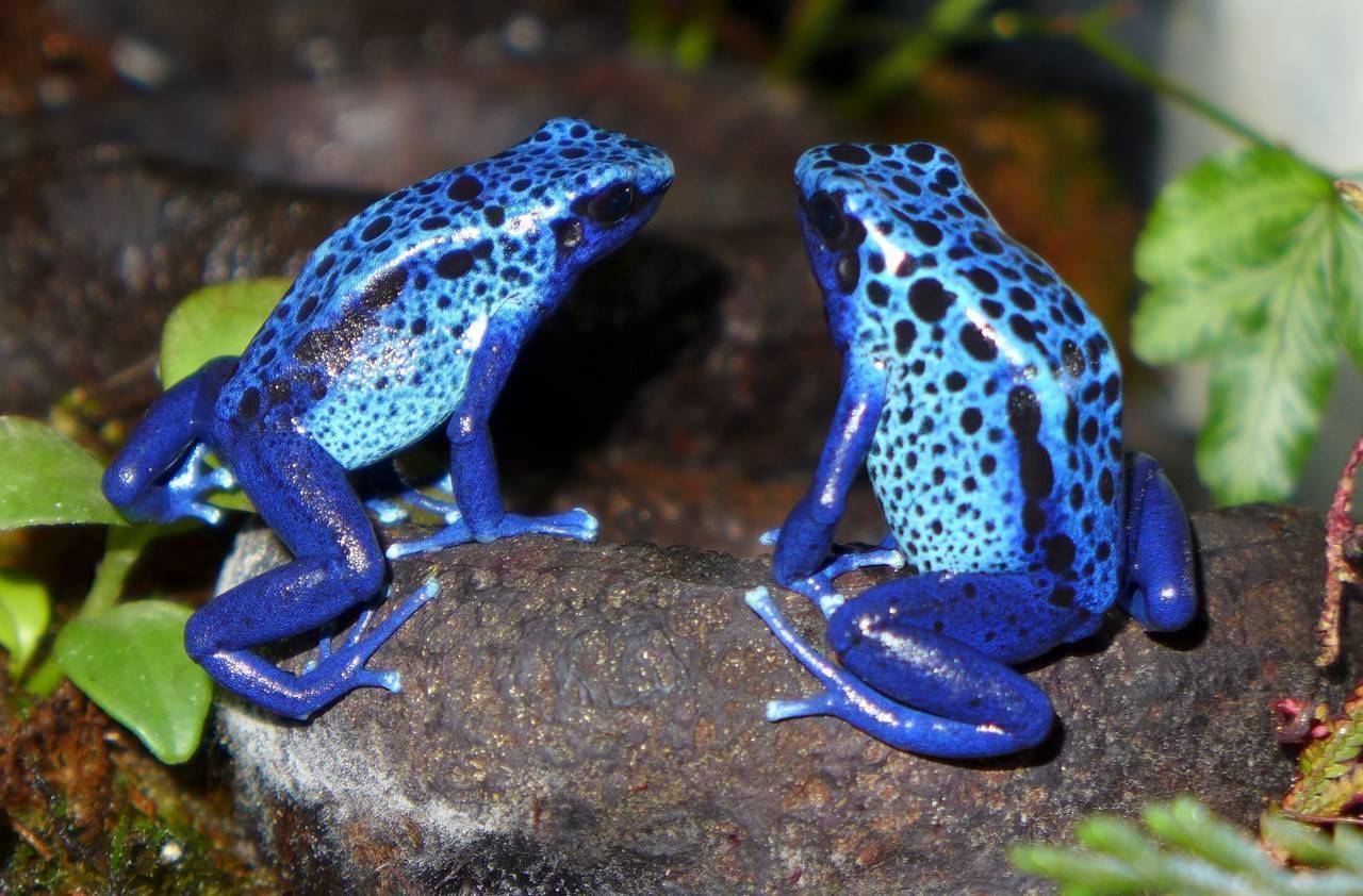 Самые ядовитые лягушки в мире: красивые и опасные