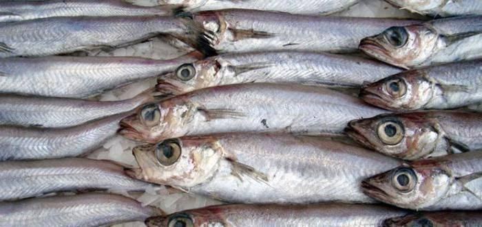 Рыба путассу— польза и вред для организма, калорийность