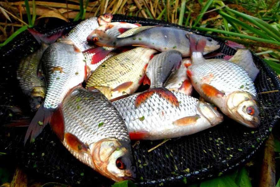 Карповский пруд (орловская область) - рыбалка