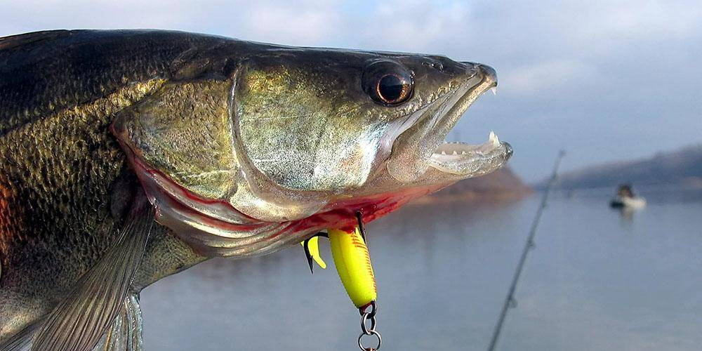 Снасти для ловли судака — для весны, лета, осени и зимы, видео, приманки и техника ловли
