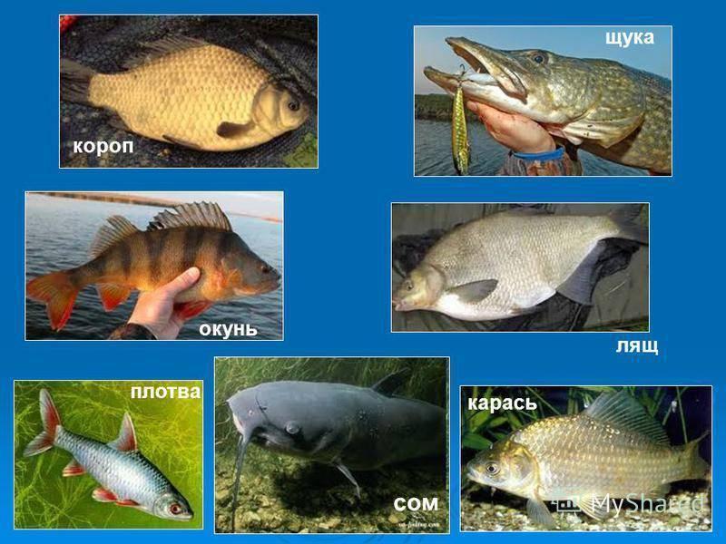 Биотические взаимоотношения у рыб