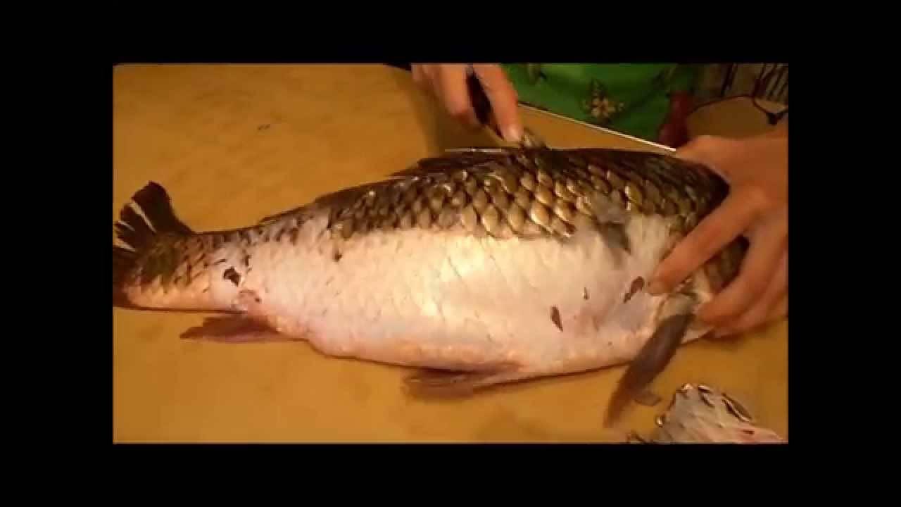 Узнаем как чистить карпа: полезные советы хозяйкам, подготовка рыбы к приготовлению, интересные рецепты рыбных блюд