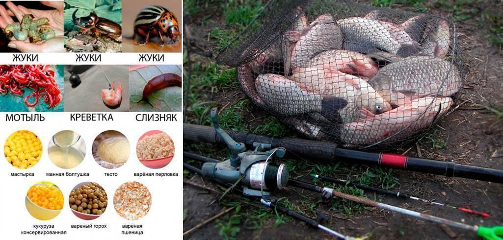 На что ловить сазана осенью: в сентябре, октябре, ноябре. снасти