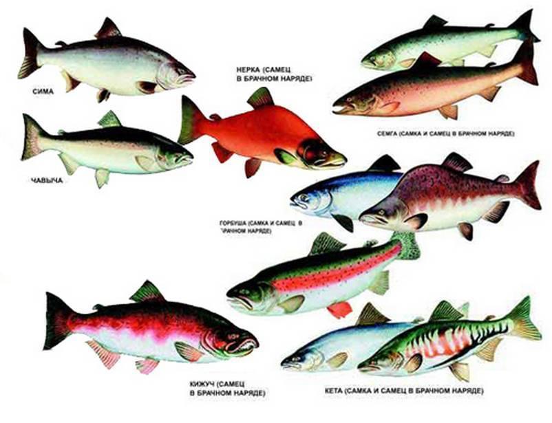 Рыбалка в сибири: особенности, рыбы сибирских водоемов, лучшие места для ловли