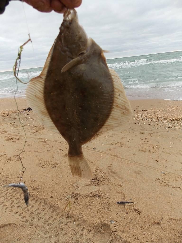 Лучшие места для рыбалки в крыму