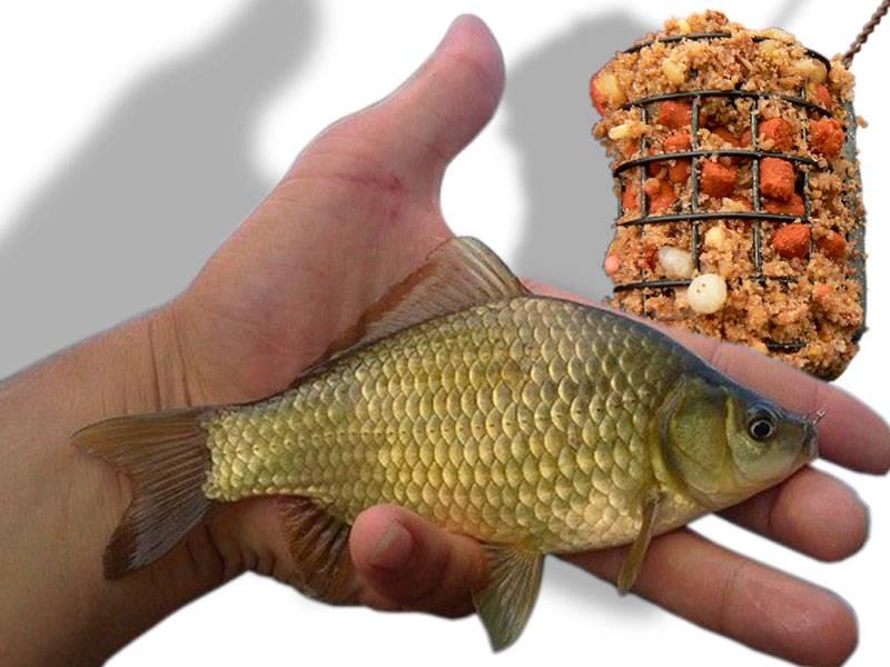 Ловля карася в феврале на мормышку - читайте на сatcher.fish