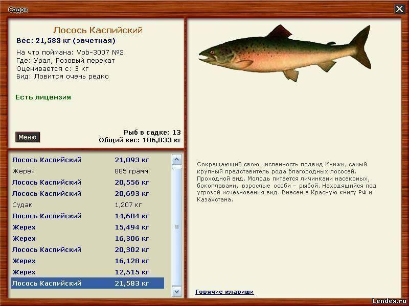 Рыба кефаль чем полезна. рыба кефаль полезные свойства
