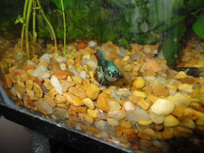 Как спят рыбы? какие рыбы впадают в спячку зимой